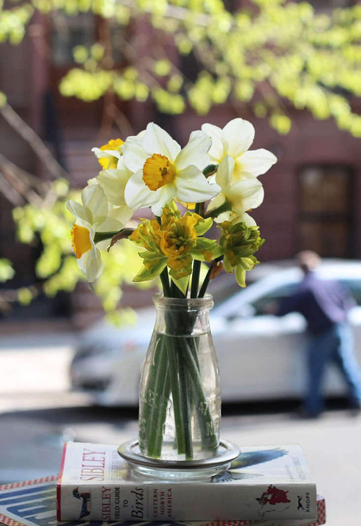 daffodils_marie viljoen_gardenista