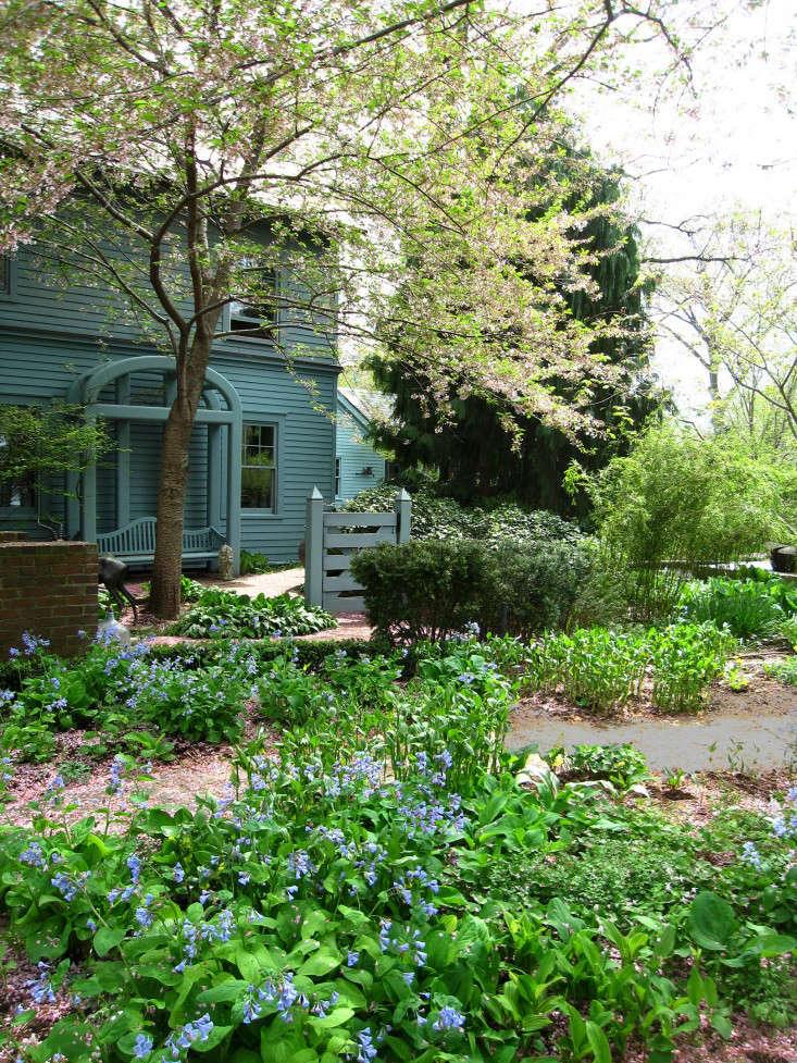 fallen-blossoms-silas-mountsier-gardenista