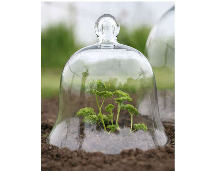 garden-cloche-glass-bell-jar-gardenista