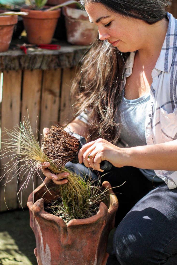 grass-care-gardenista-1
