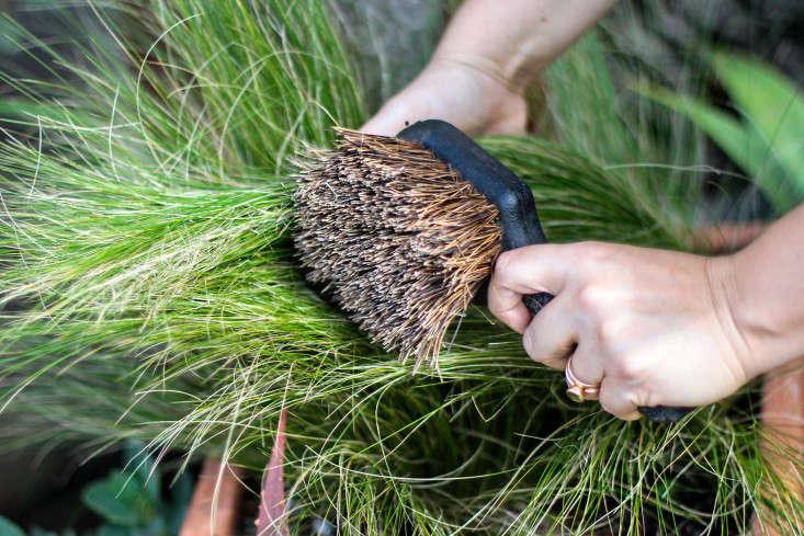 grass-care-gardenista-4