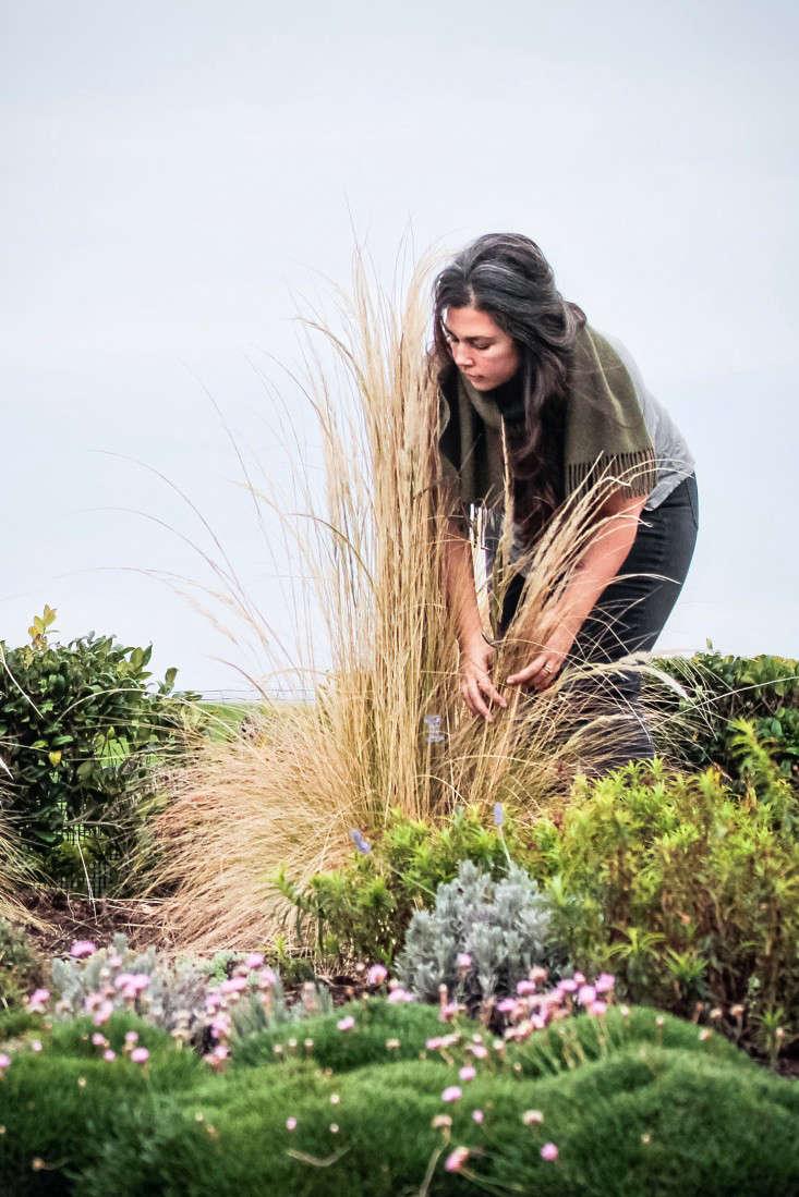 grass-care-gardenista-7