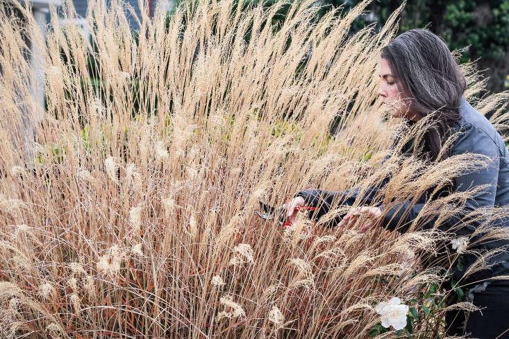 grass-care-gardenista-8