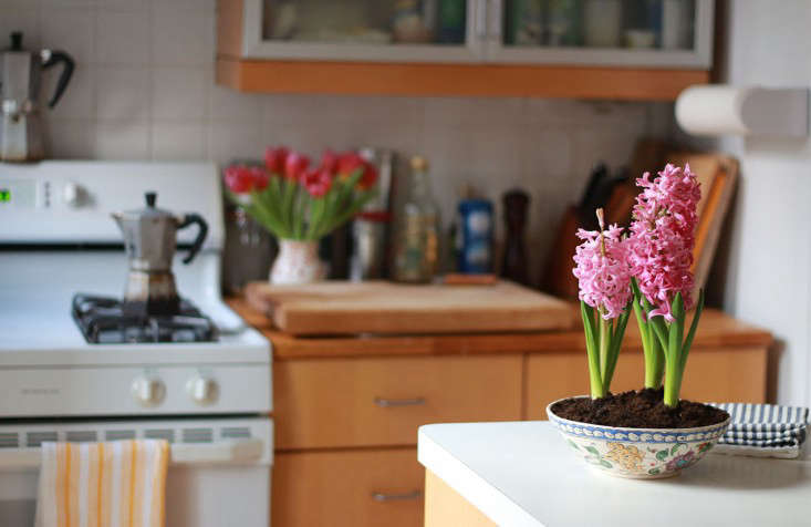 hyacinths-tulips-kitchen-flowers_marie viljoen-diy-gardenista