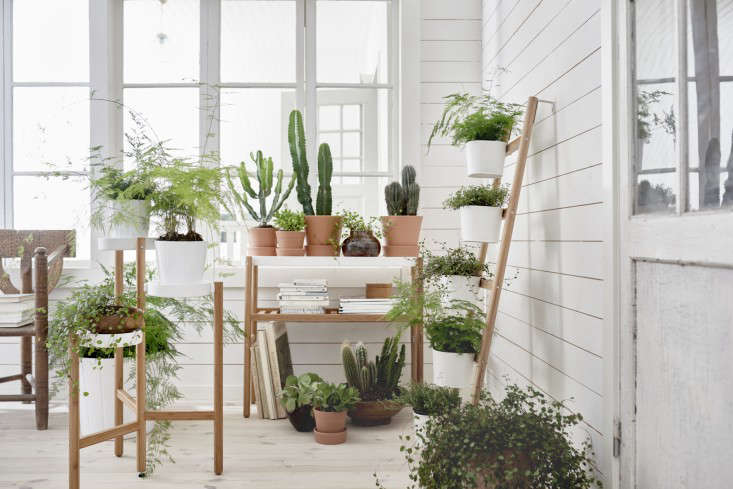 ikea-plant-stands-new-satsumas-gardenista