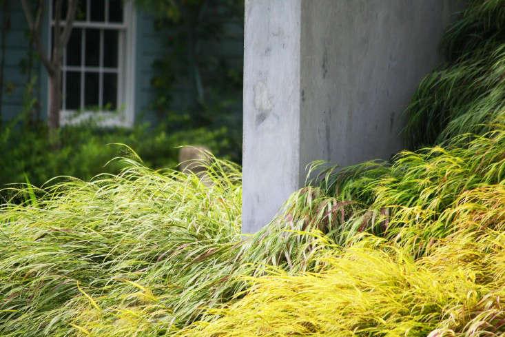 japanese forest grass_marie viljoen_gardenista