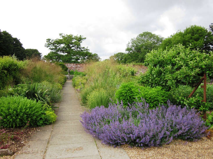 Lavender in bloom in the Hinton Ampner gardens in Hampshire. Photograph by Leimenide via Flickr.