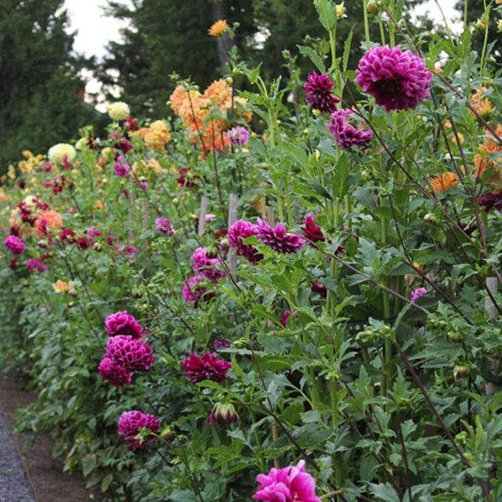 meadowburn-byba-vincenza-gardenista