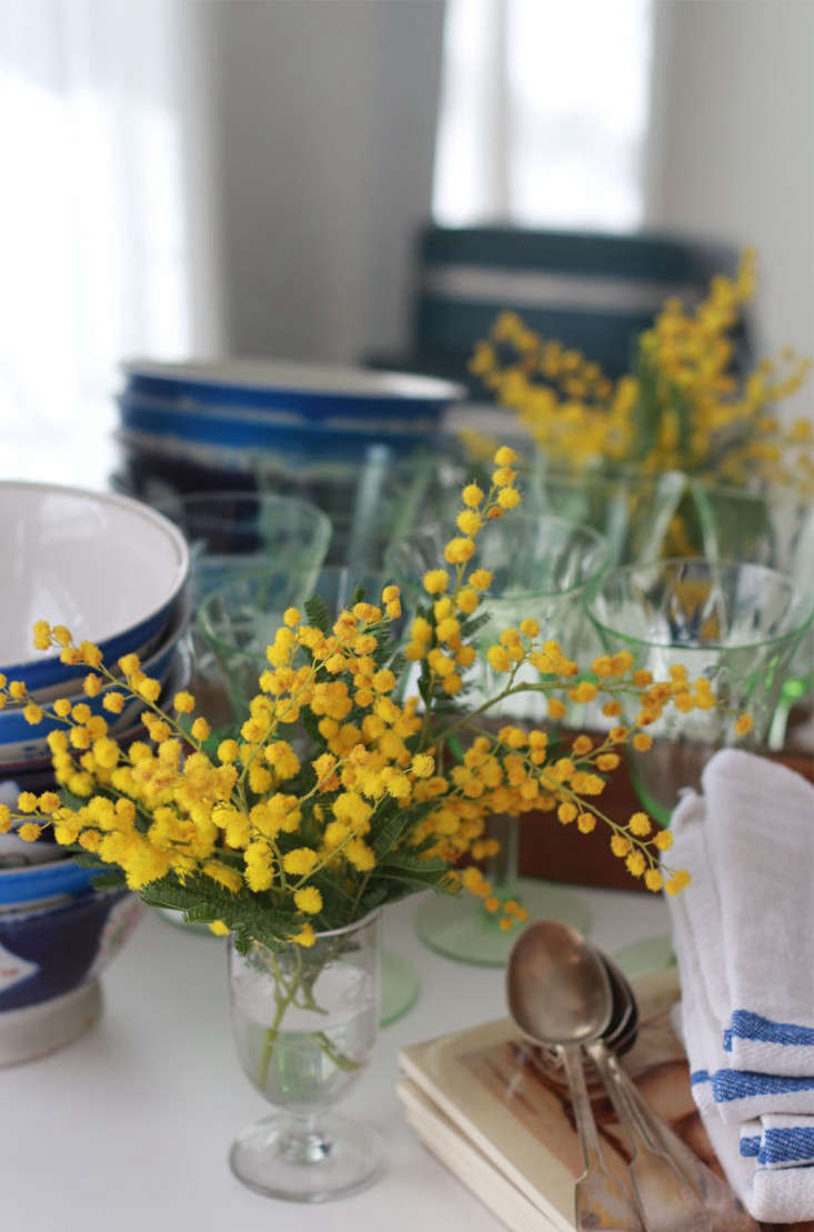 mimosa_marie viljoen_gardenista