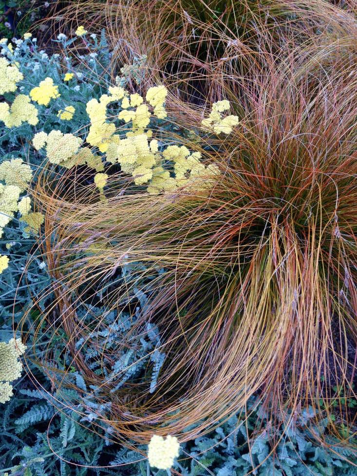 perennial-grasses-gardenista-yarrow