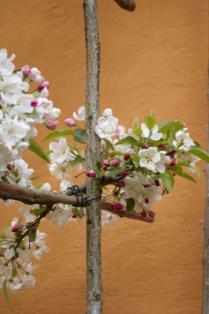 pleaching-britt-dyer-4-gardenista.