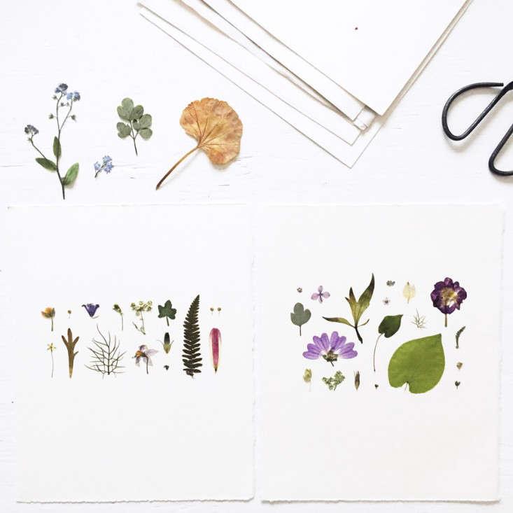pressed-flower-artworks-2--mr-studio-london-gardenista