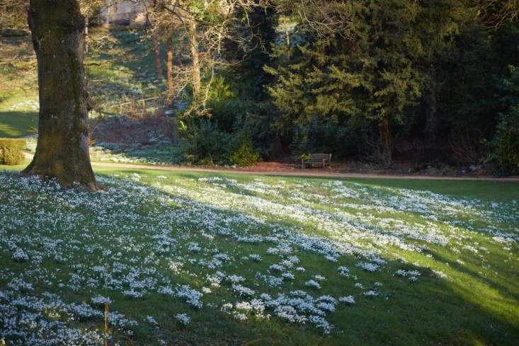snowdrops-britt-willoughby-dyer-gardenista-17