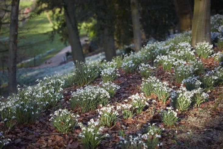 snowdrops-britt-willoughby-dyer-gardenista-18