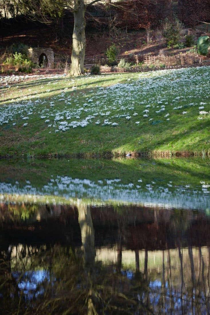 snowdrops-britt-willoughby-dyer-garenista-25