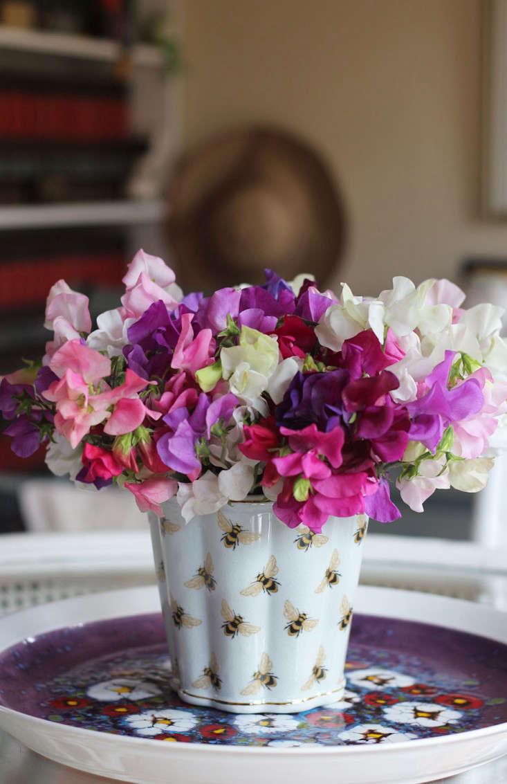 sweetpeas_marie viljoen_gardenista