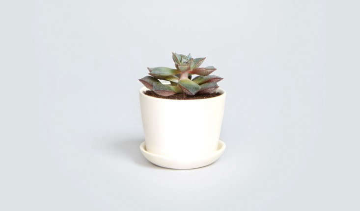 tiny-succulent-stoneware-clay-pot-the-sill-gardenista