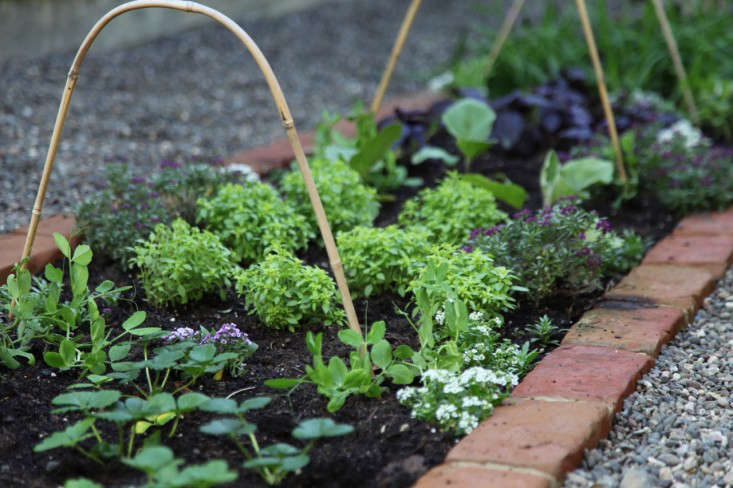 Edible Garden with The Home Depot | Gardenista