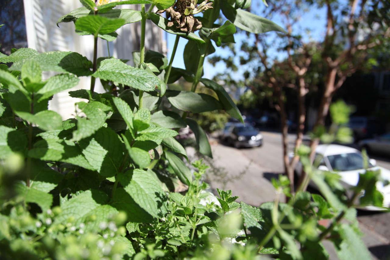 Urban Gardening in Window Box | Gardenista