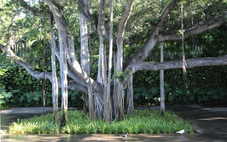 banyan-tree-doris-duke-shangi-la-honolulu-hawaii-gardenista