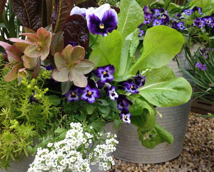 container-garden-spring-to-summer-palette-molly-garrett-gardenista-1