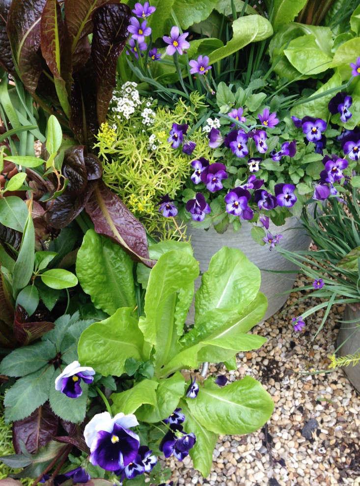 container-garden-spring-to-summer-palette-molly-garrett-gardenista-2