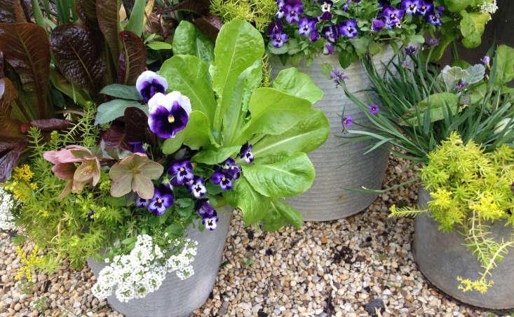 container-garden-spring-to-summer-palette-molly-garrett-gardenista-3