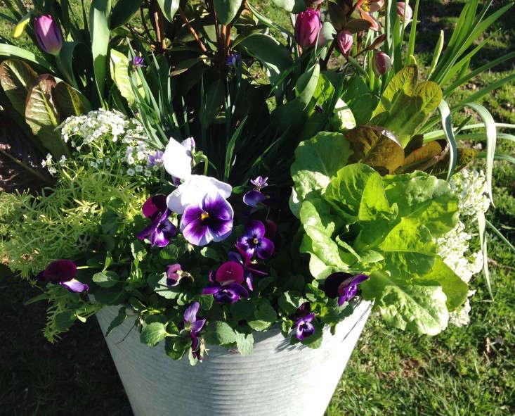 container-garden-spring-to-summer-palette-molly-garrett-gardenista-4