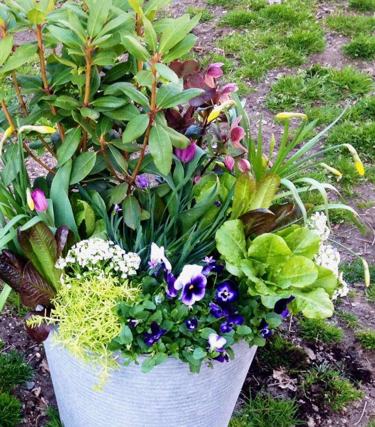 container-garden-spring-to-summer-palette-molly-garrett-gardenista-5