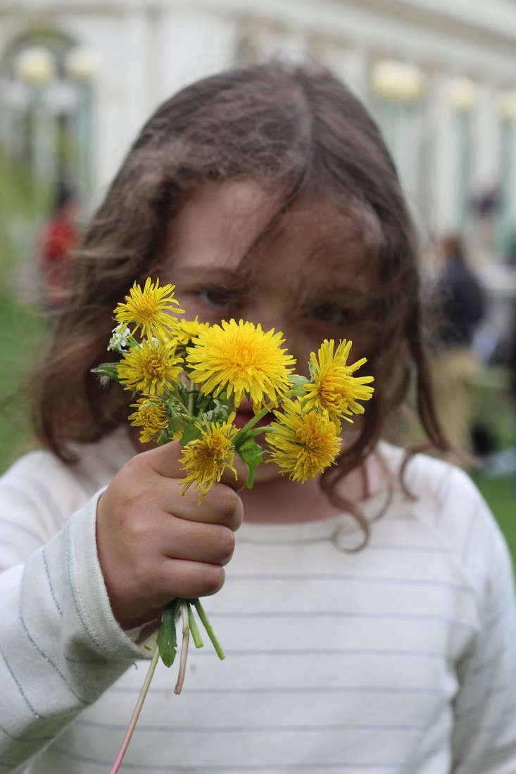 dandelion flowers_marie viljoen_gardenista