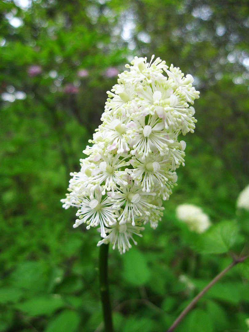 Native Perennials For A Shade Garden 9 Favorites For Cold Climates Gardenista