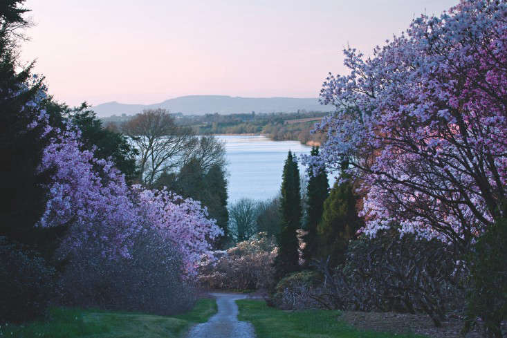 fixed-the-irish-garden-ireland-gardenista-Mount Congreve Magnolias and Suir11