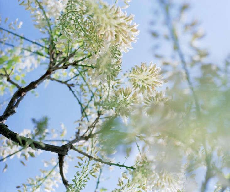 howard-sooley-wisteria-sinensis