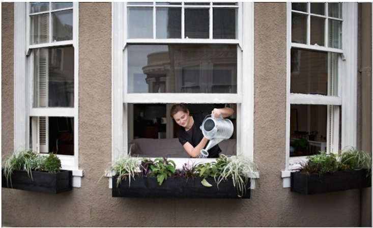meredith-watering-plants-window-boxes-gardenista