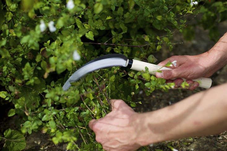 niwaki-herbaceous-sickle-gardenista