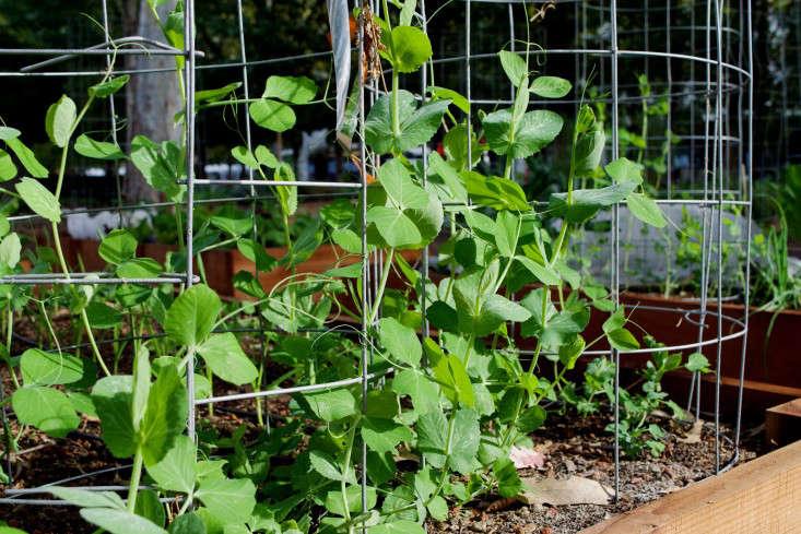 paypal-garden-start-organics-gardenista-DSC_0418