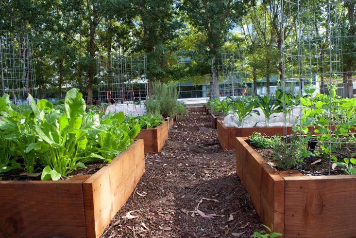 paypal-garden-start-organics-gardenista-DSC_0420