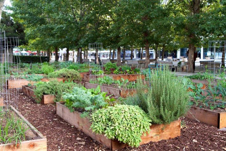 paypal-garden-start-organics-gardenista-DSC_0422