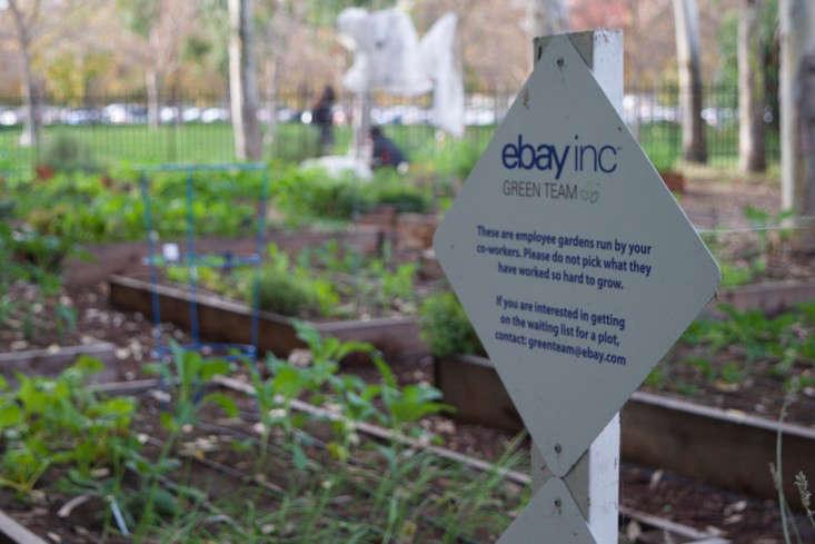 paypal-garden-start-organics-gardenista-DSC_0434