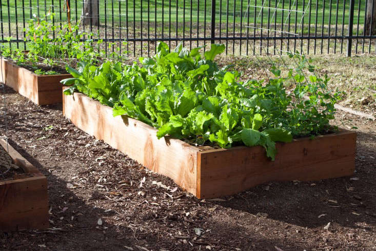 paypal-garden-start-organics-gardenista-DSC_0478
