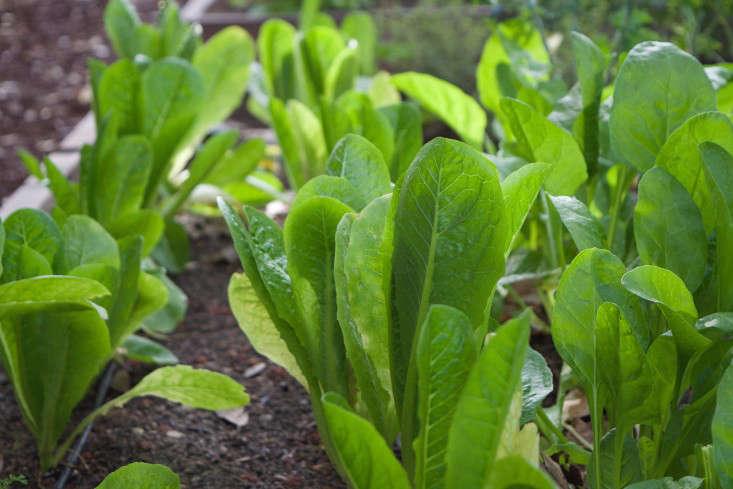 paypal-garden-start-organics-gardenista-DSC_0509