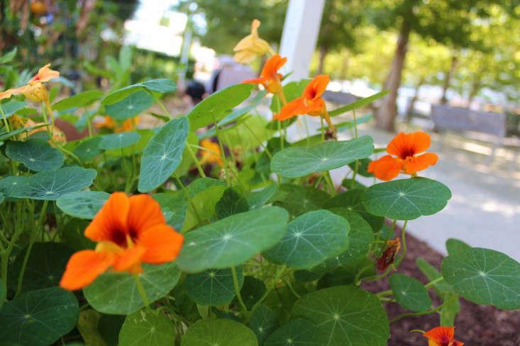 paypal-garden-start-organics-gardenista-IMG_0040