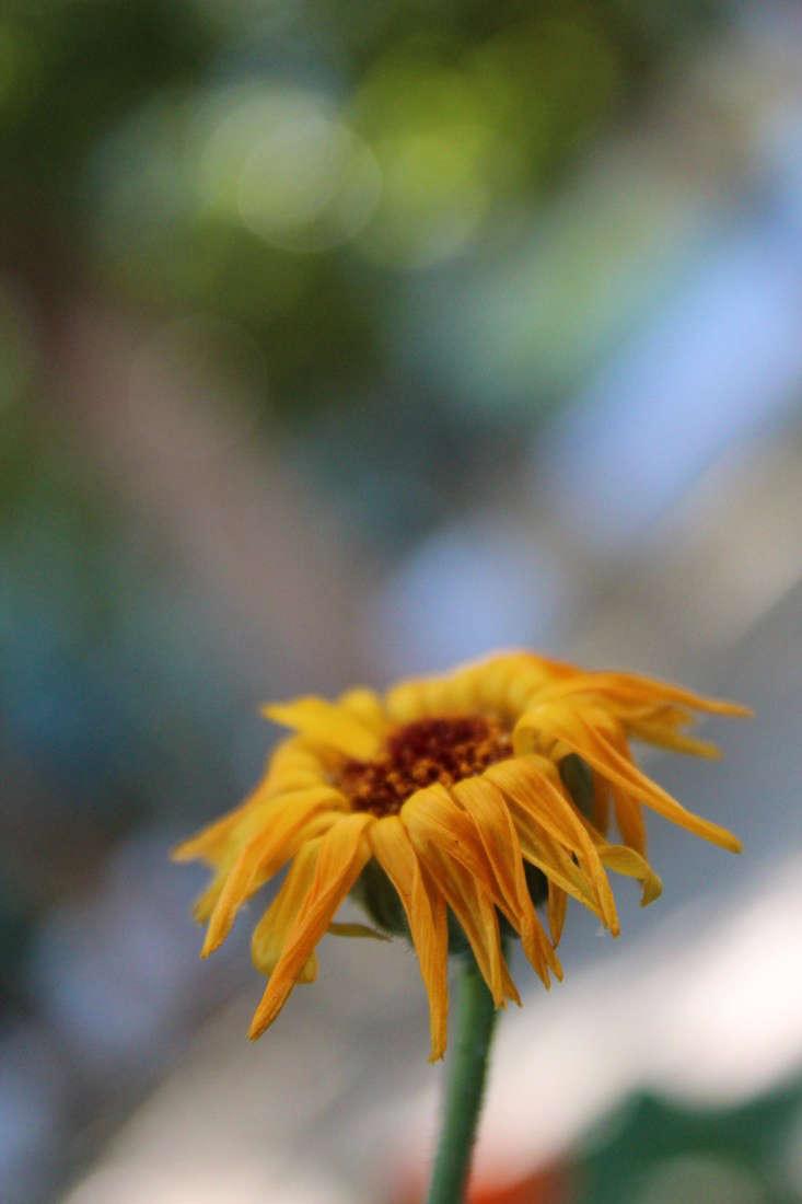 paypal-garden-start-organics-gardenista-IMG_0042
