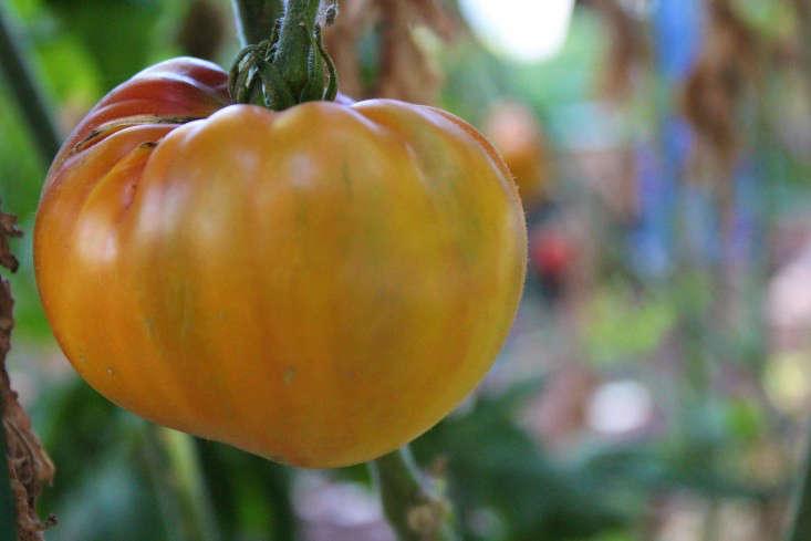 paypal-garden-start-organics-gardenista-IMG_0043