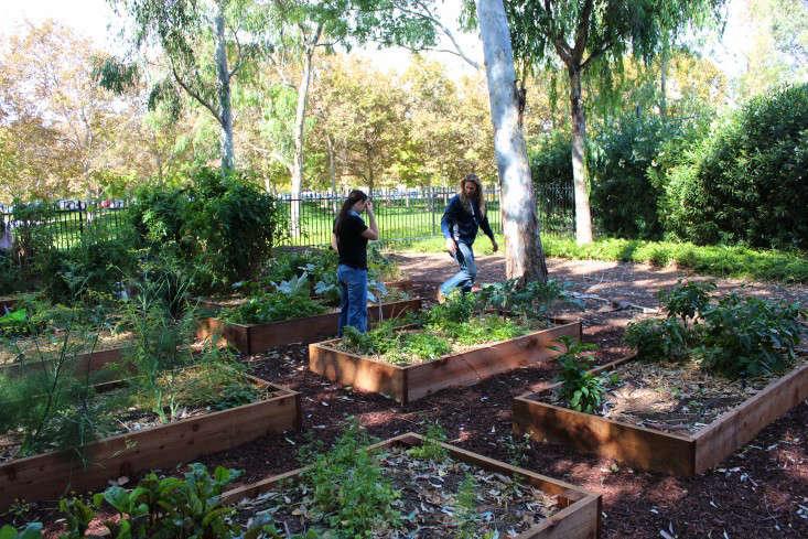 paypal-garden-start-organics-gardenista-IMG_0054
