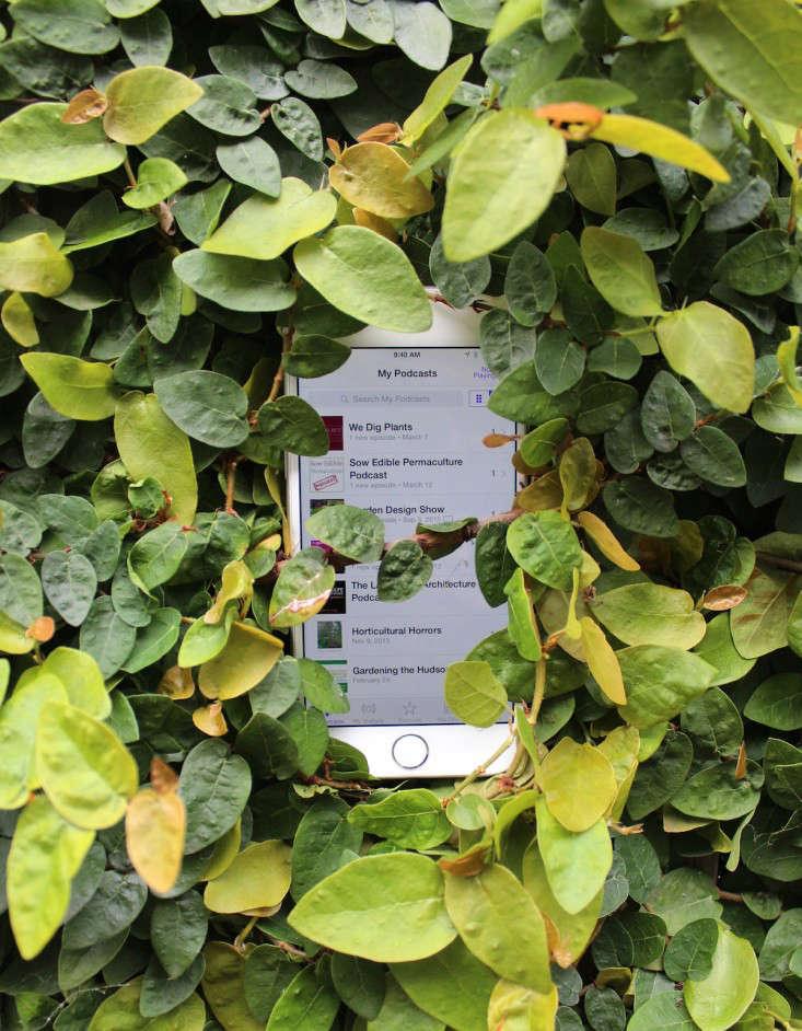 podcasts-gardens-gardening-gardenista-iphone-IMG_2907