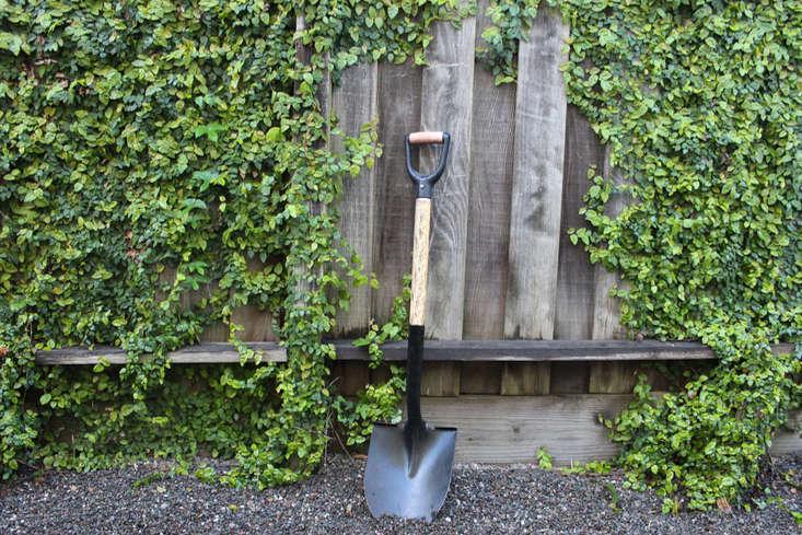 shovel-against-fence-creeping-fig-gardenista