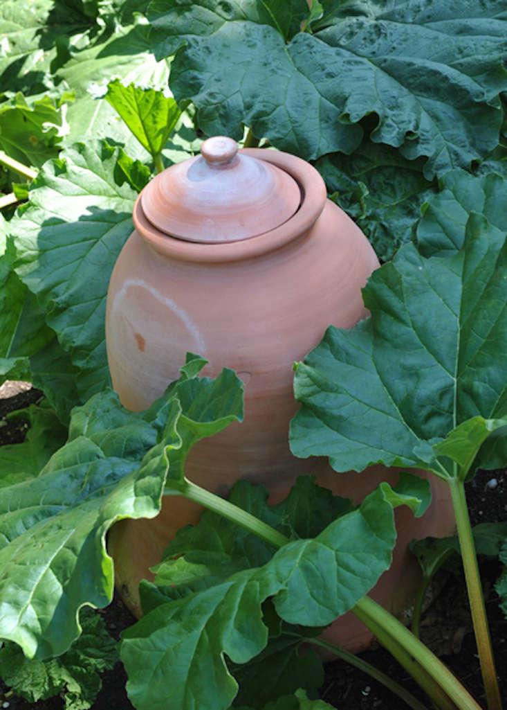 terra-cotta-rhubarb-forcer-rhs-gardenista