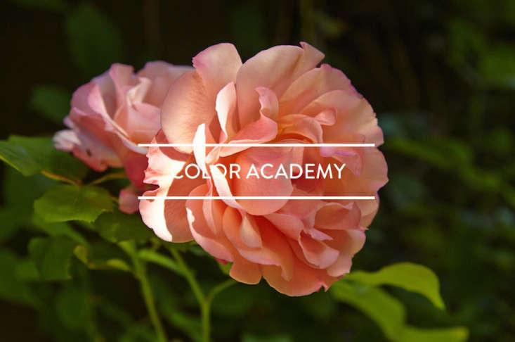 toc-color-academy-gardenista