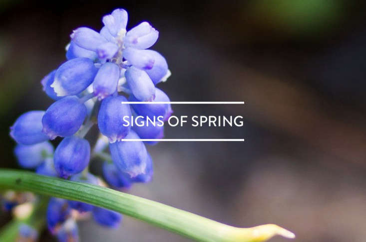 toc-signs-of-spring-gardenista